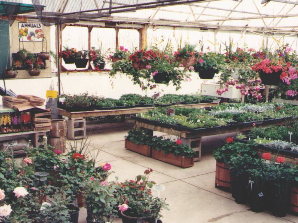 Green House Spring Of 1985